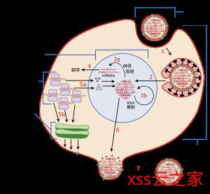 宁哥科普:新型冠状病毒能被杀死吗?