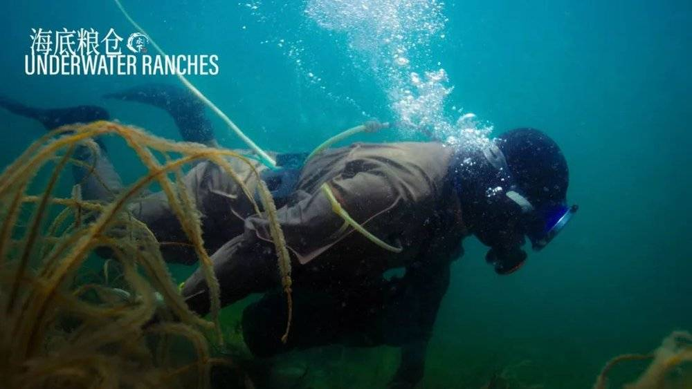 湖南女孩叫板BBC,冒死拍出中国的水下世界,震撼程度爆表